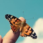 butterfly-on-finger